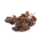 Dried muscatel raisins on vine